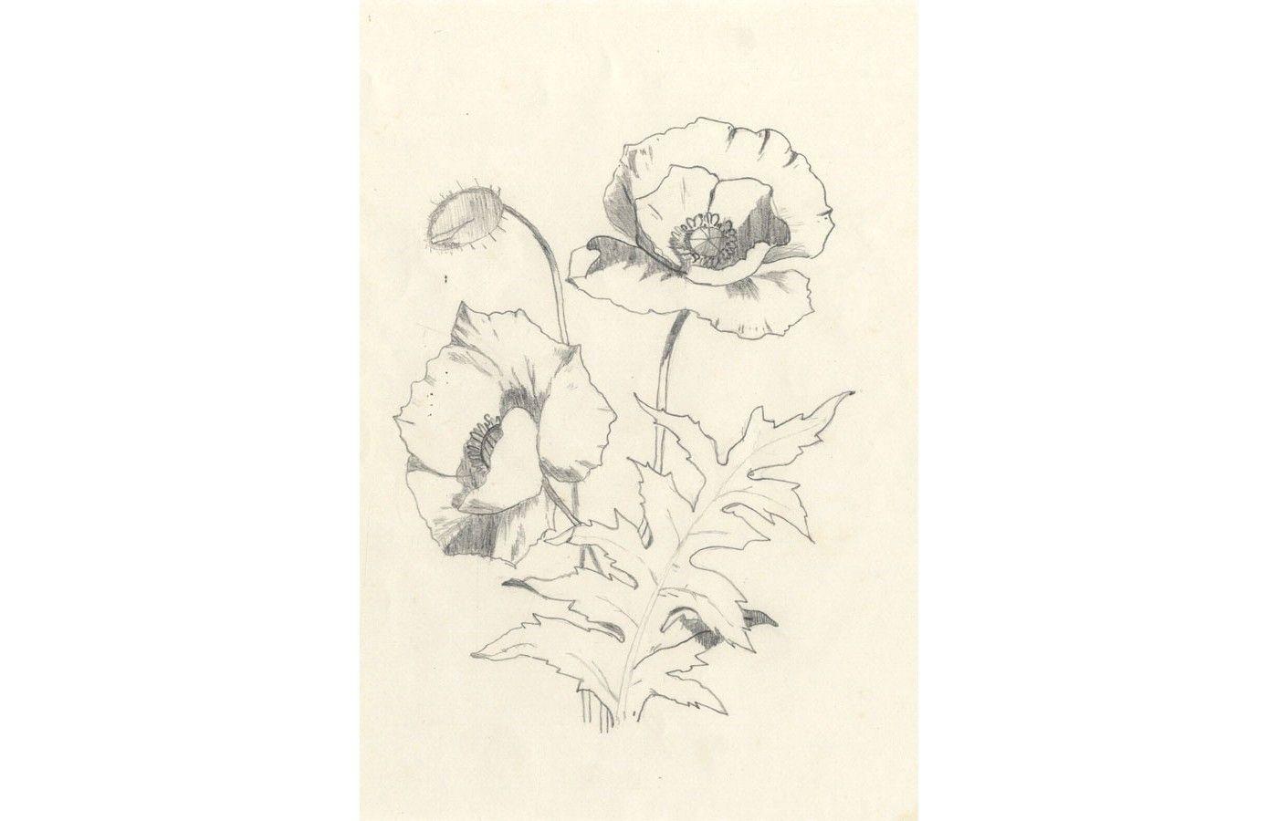 Monogram F.L. - 1889 Graphite Drawing, Poppies