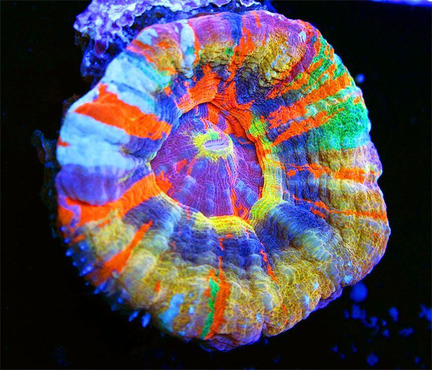 Pin On Saltwater Aquarium