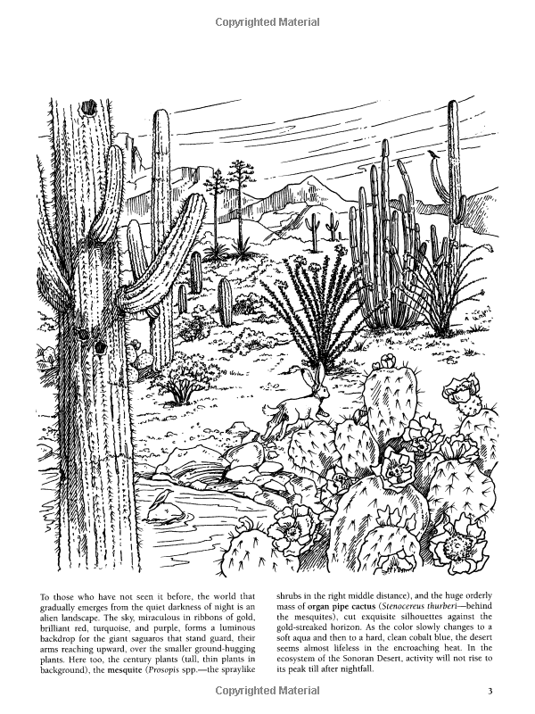 The Sonoran Desert by Day and Night (Dover Nature Coloring Book ...