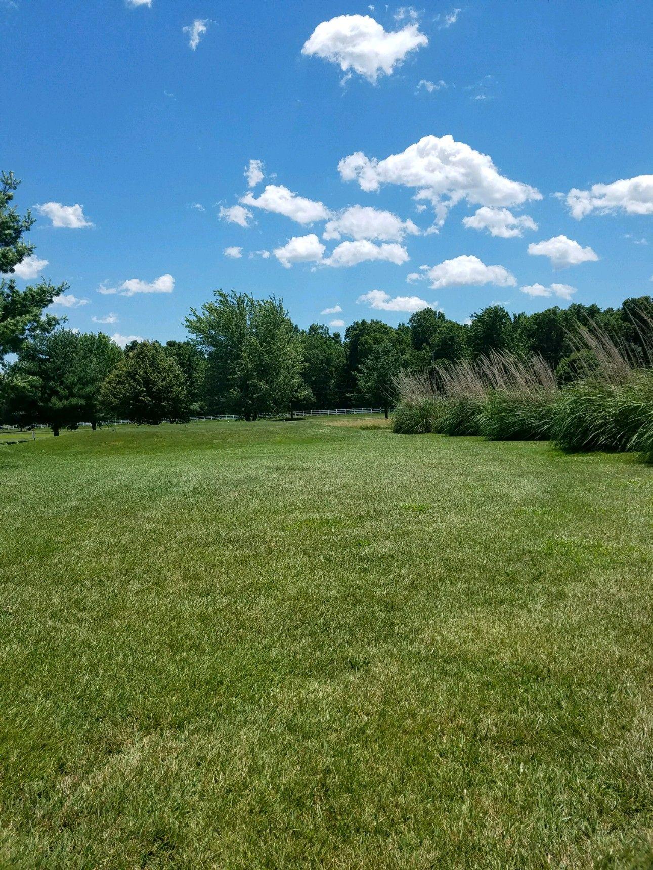 Green grass green lawn summer day green lawn green