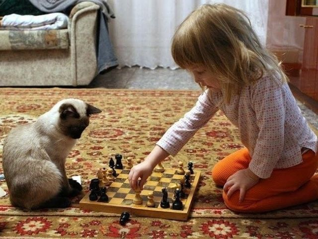 20touching moments when cats revealed their kind hearts
