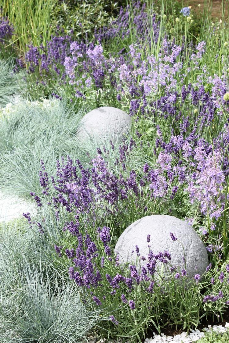 Unusual Small Backyard Ideas  Blue fescue, Lavender garden