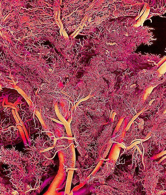 Resultado de imagen de El microscopio electrónico nos enseña cosas alucinantes de nuestro cuerpo