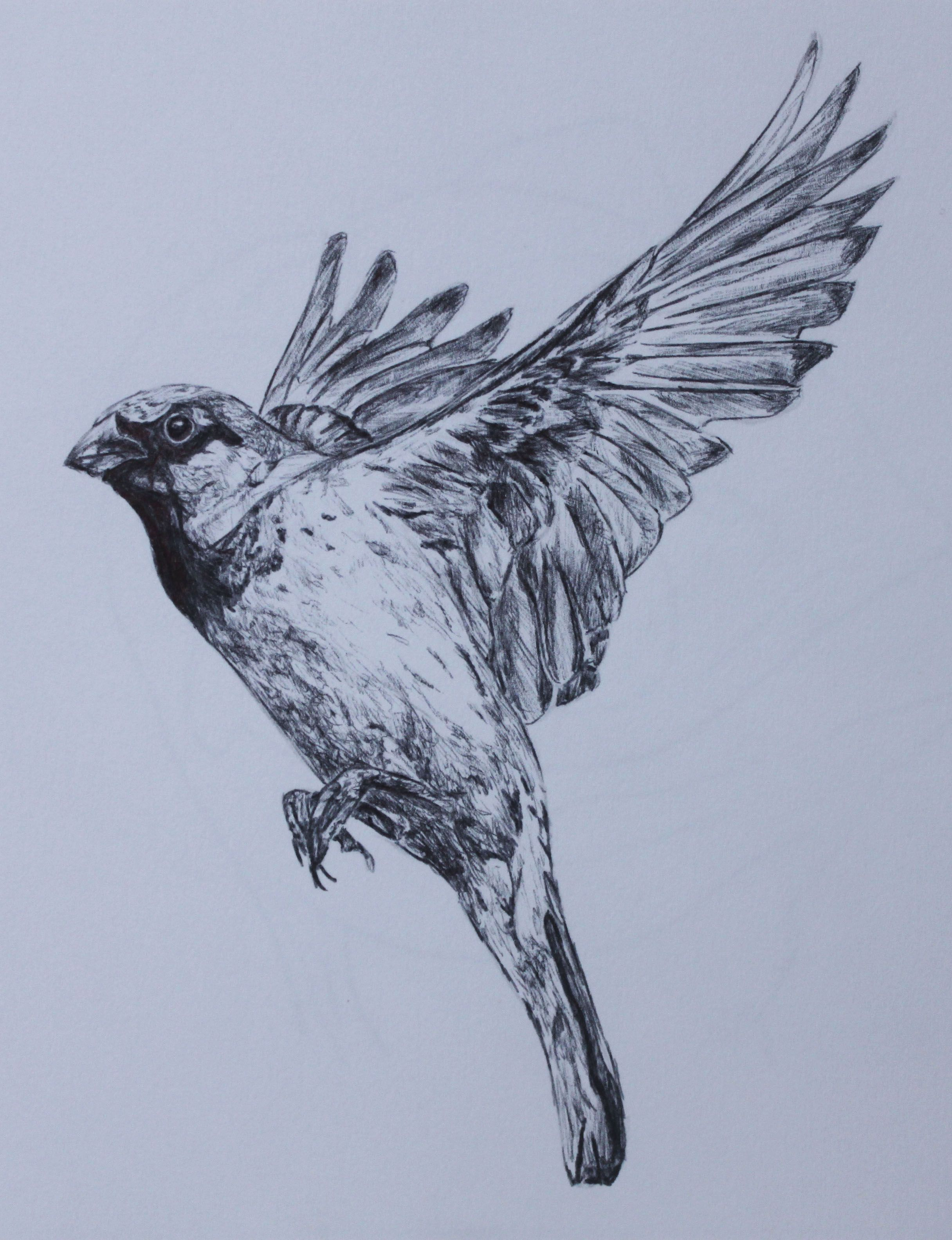 Part of a series of drawings of birds Biro, 12x18cm. # ...