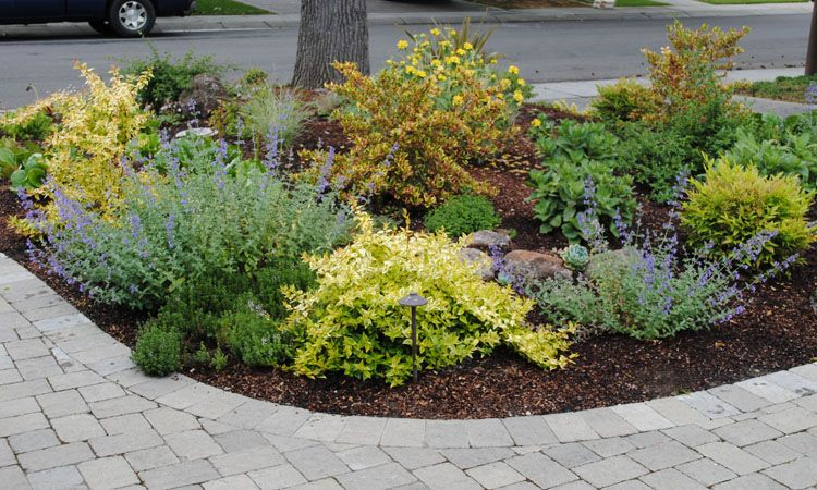Landscaping ideas no grass front yard no lawn garden for No maintenance front yard