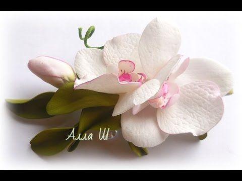 Фото цветов многолетников с названиями для дачи высокие