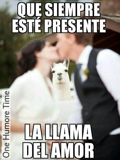 Modem Nuevo Mirate Estas Imagenes De Humor Papa 5 Funny Memes Spanish Memes Funny Pictures