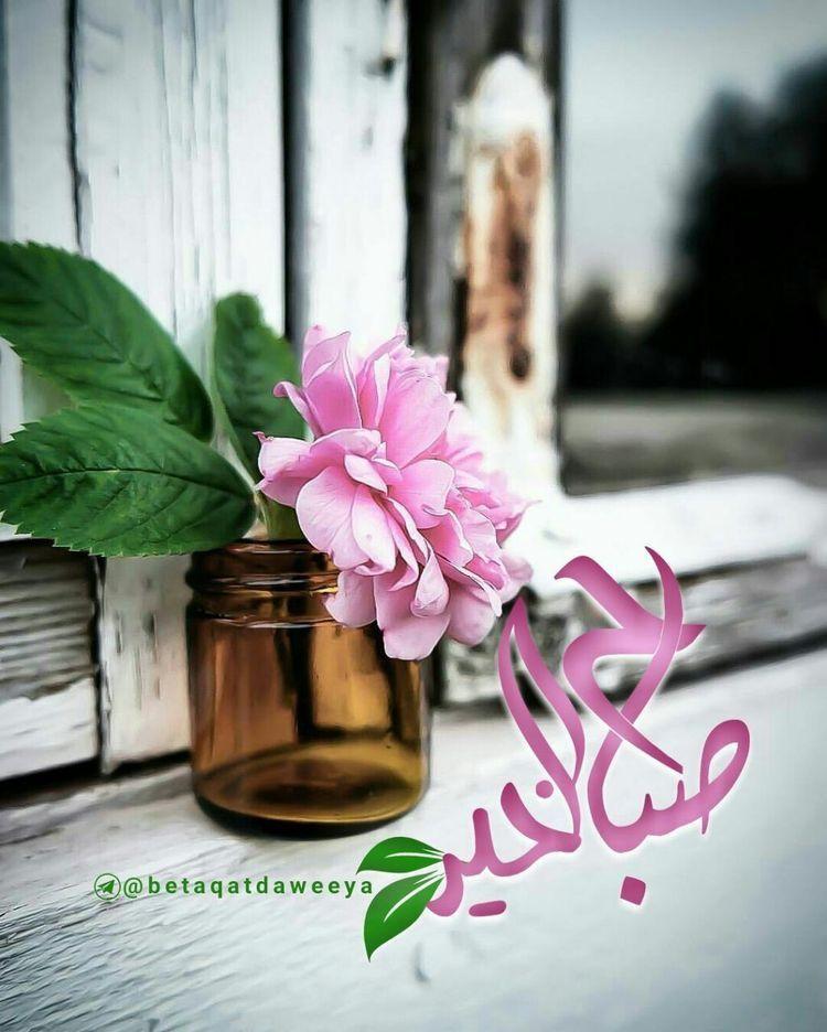 Pin By Ali علي On صباح الخير Good Morning Morning Greeting Morning Wish Morning Images