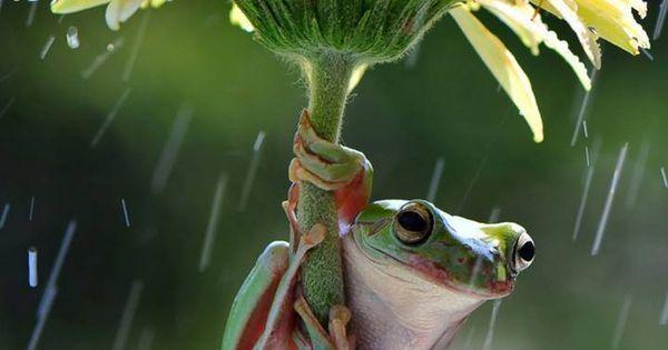Se escondendo da chuva!!