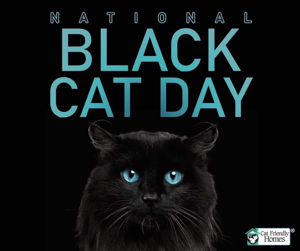 October 27th National Black Cat Day Black Cat Day Cat Friendly