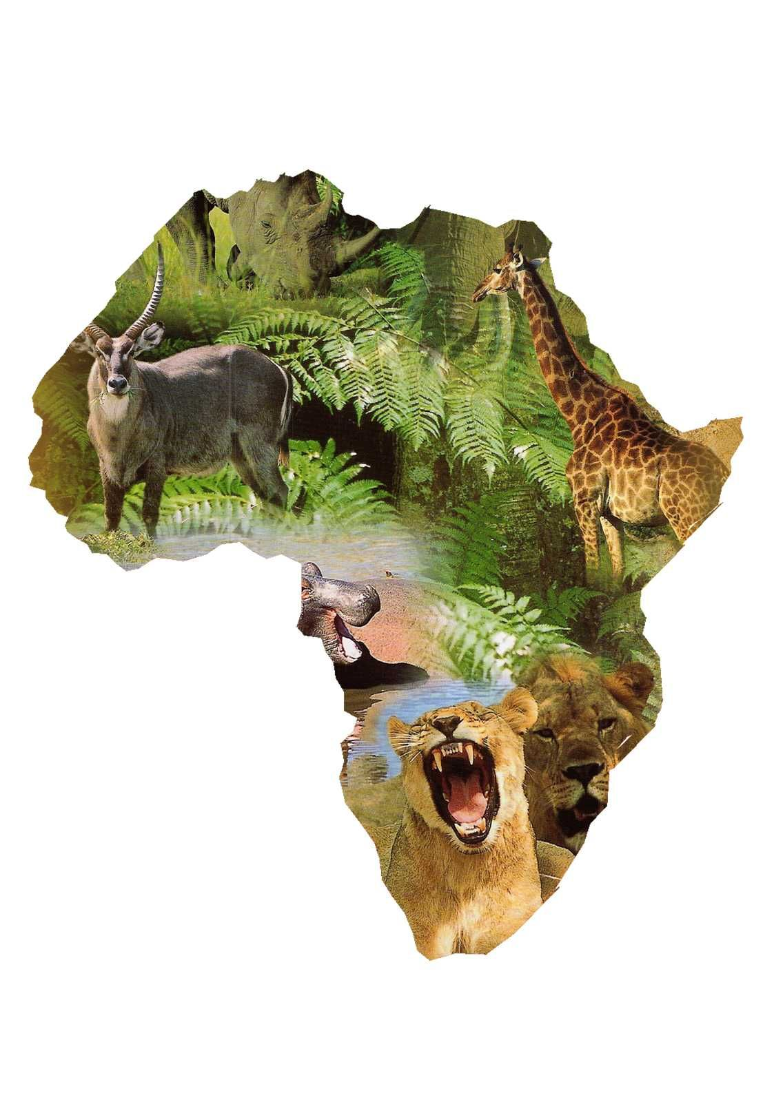 Similiar African Animals A Z List Keywords Arte