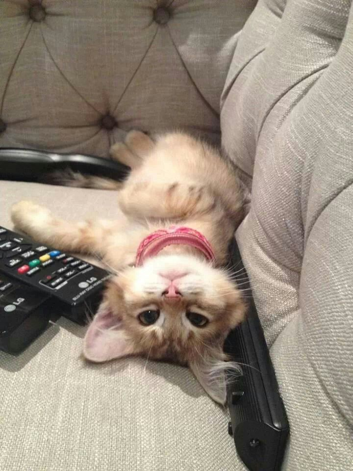 always on the remotes...