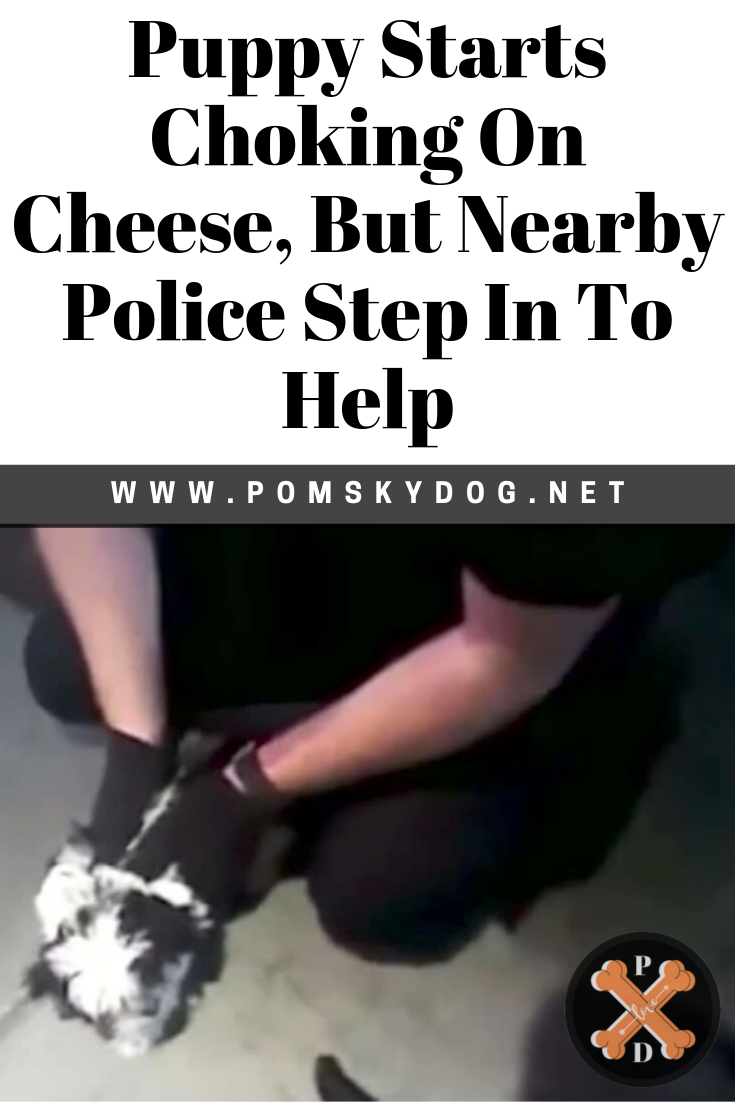Puppy Starts Choking On Cheese But Nearby Police Step In To Help
