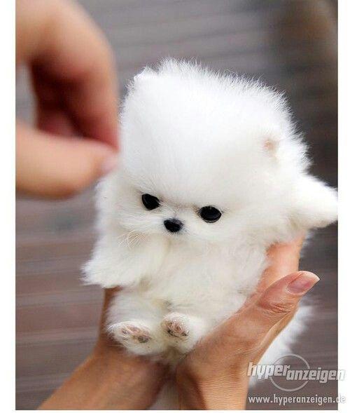 Aaaaaaw Cute Baby Animals