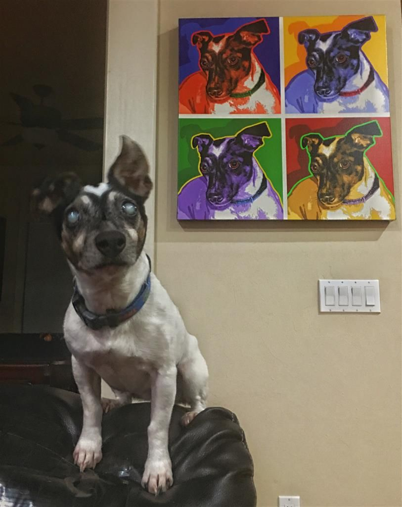 Lost Dog Jack Russell Terrier Gainesville Fl United States