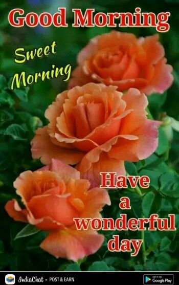Beautiful morning i morning in 2018 pinterest beautiful beautiful morning i morning in 2018 pinterest beautiful morning morning greetings quotes and morning pictures m4hsunfo