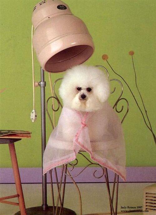 Hairdresser Pet Groomers Dog Grooming Dog Groomers