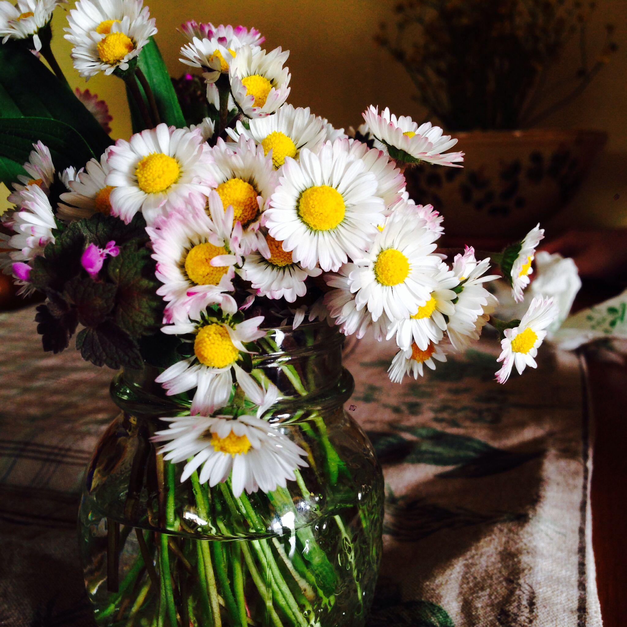__salvando le margherite__ #primavera