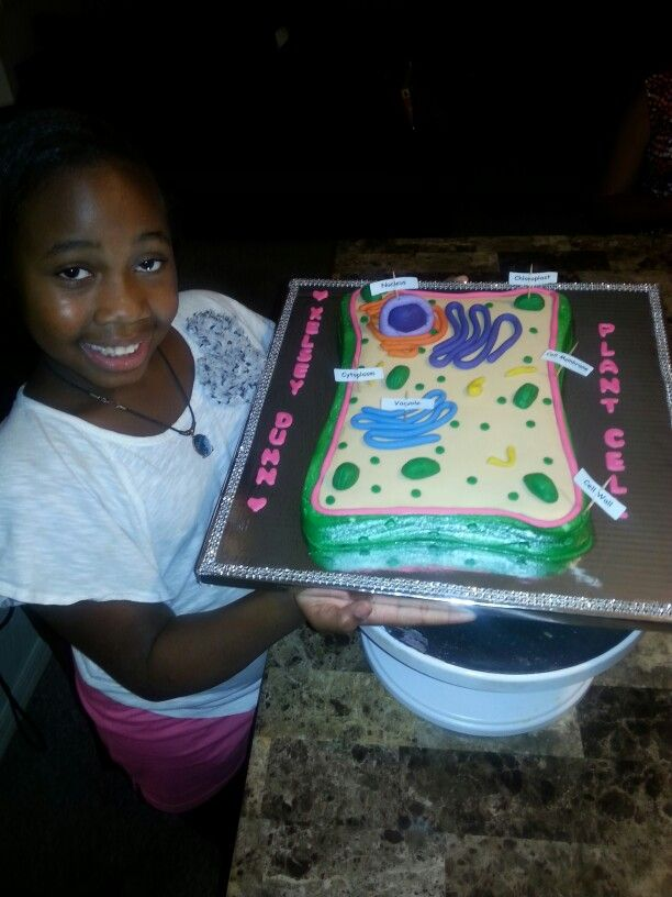 plant cell cake   niece project