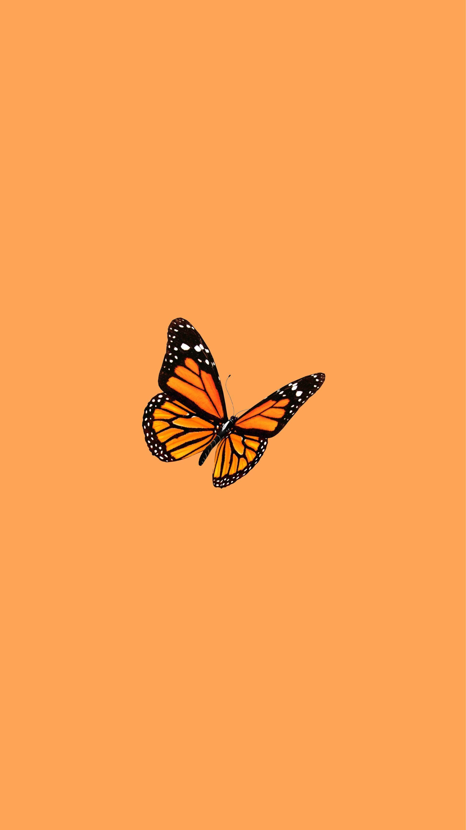 Orange Aesthetic Discover Butterfly Wallpaper Orange Wallpaper Butterfly Wallpaper Butterfly Wallpaper Iphone