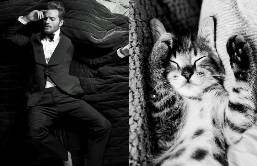 Des Hommes Et Chatons des hommes et des chatons you're welcome! | sexy | cats, kittens