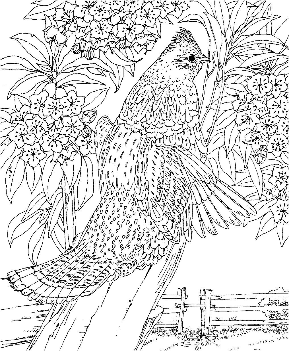 Don\'t forget to share Difficult Animals Coloring Pages For Adults on ...