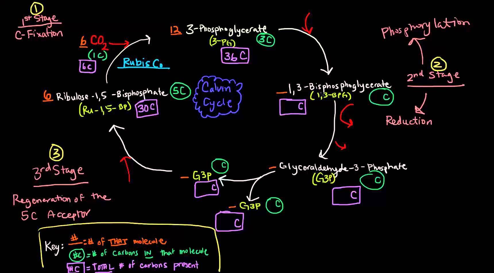 Photosynthesis (Part 3 of 3) - Dark Reactions, Calvin Cycle, Carbon Fixa...