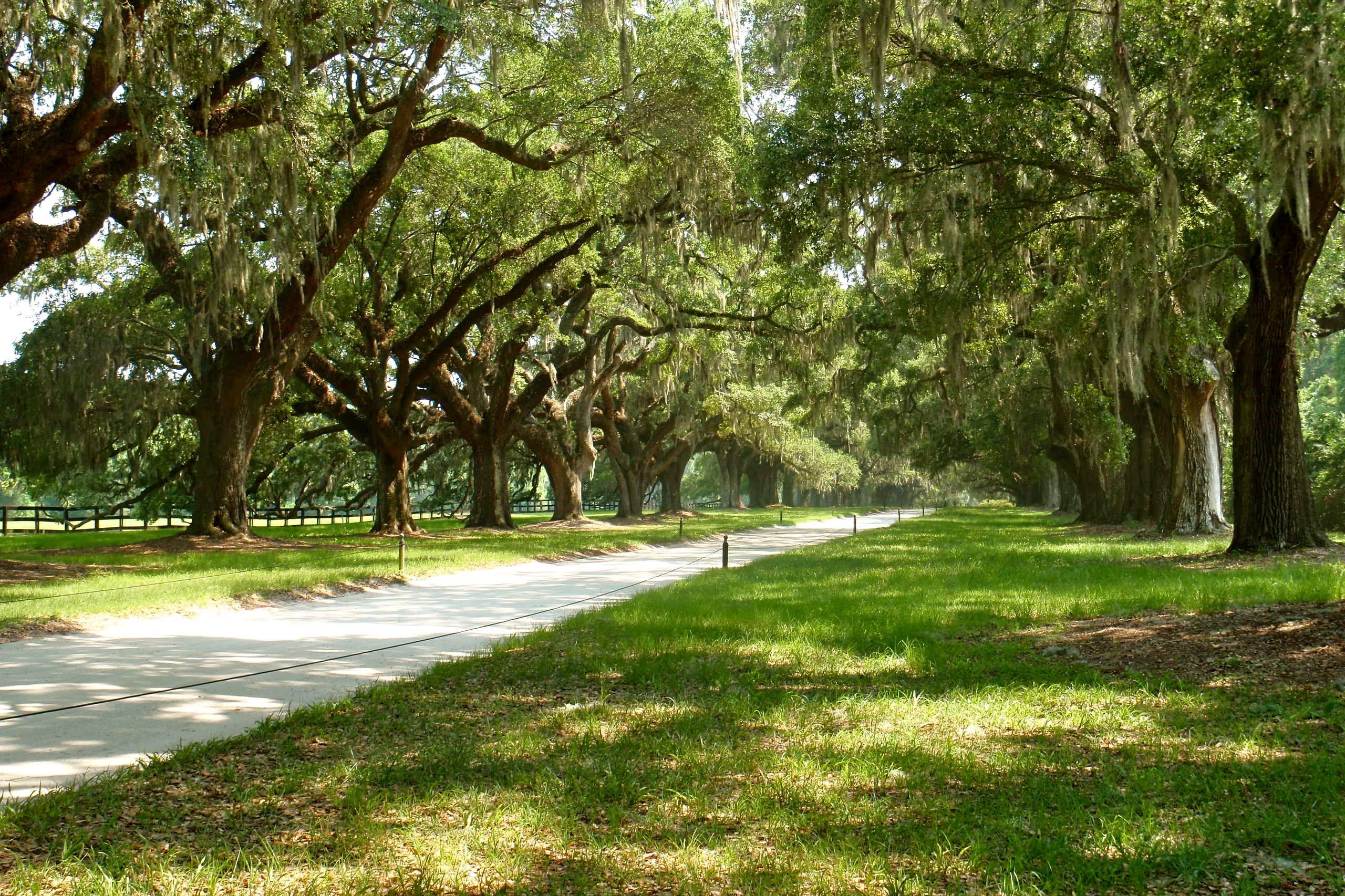 Boone Plantation, Charleston SC