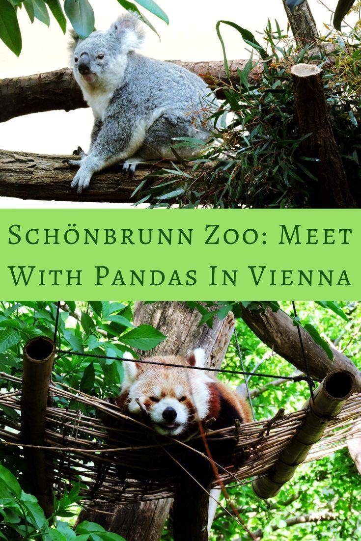 Schonbrunn Zoo Meet With Pandas In Vienna Our Wanders Zoo Panda Koala Bear