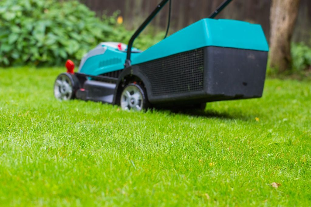 Mowing Wet Grass Here Are The Top 20 Tips To Know Grass Lawn