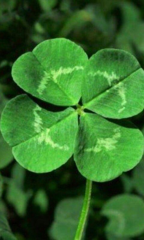 Irish Symbols And Their Meanings Clover Leaf Irish Symbols