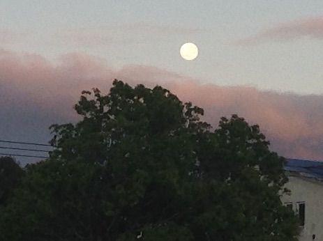 Blood Moons - A Poem By Marjorie Meetoo