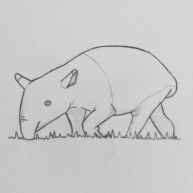 Another Old Doodle Tapir Animal Sketch Sketchbook Cute Drawing