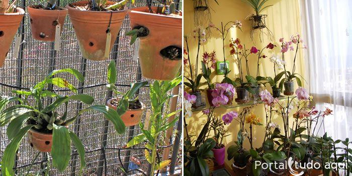 Veja 4 dicas para cuidar bem das orquídeas no verão e deixar a sua planta sadia mesmo na temporada mais quente do ano!