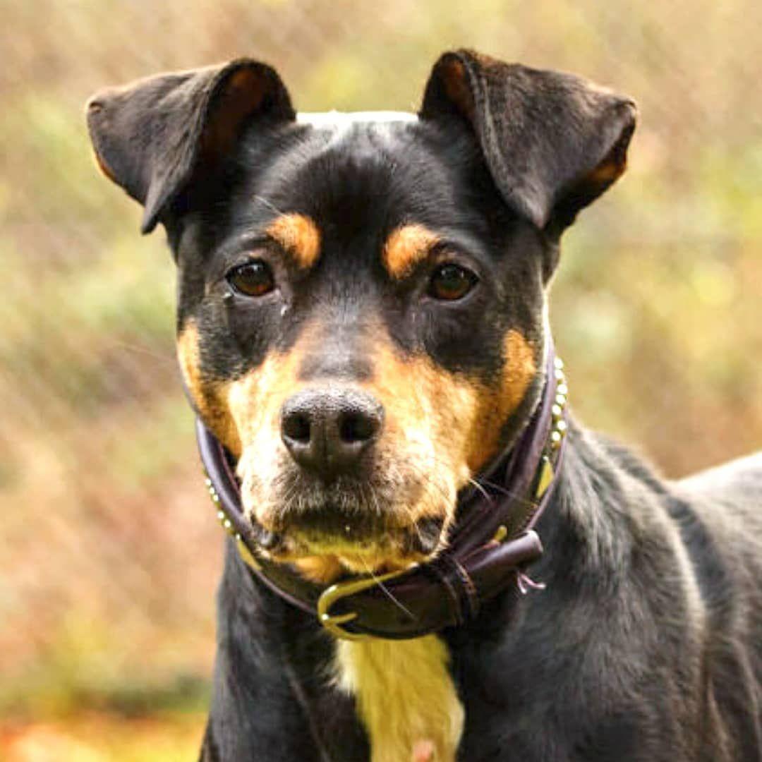 Hallo Liebe Hundefreunde Ich Bin Die Etwa 2012 Geborene Mischlingshundin Polly Ich Kam Als Fundhund Ins Tierheim Freud In 2020 Animals Labrador Retriever Labrador