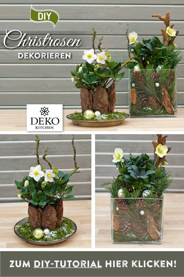 DIY: Christrosen effektvoll dekorieren
