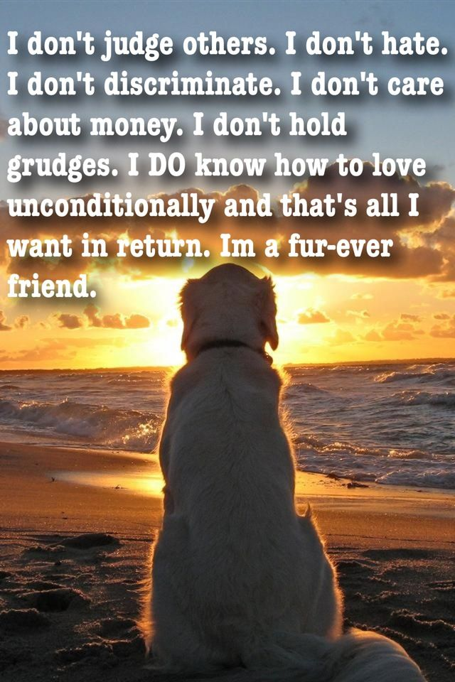 indeed...this is true.. love dogs !