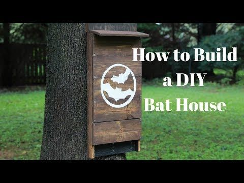 How to Build a DIY Bat House For Your Backyard and Get Rid of Mosquitoes