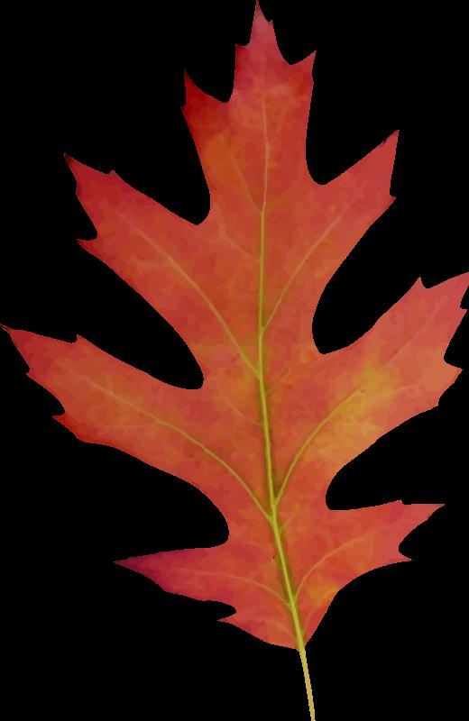 Leaf 11 Leaves Plant Leaves Png