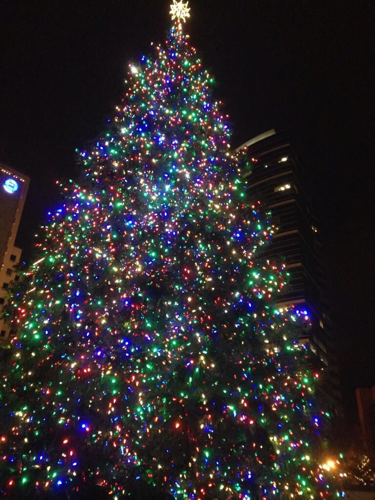 Portland Christmas Tree.Portland Oregon S Christmas Tree In Pioneer Square