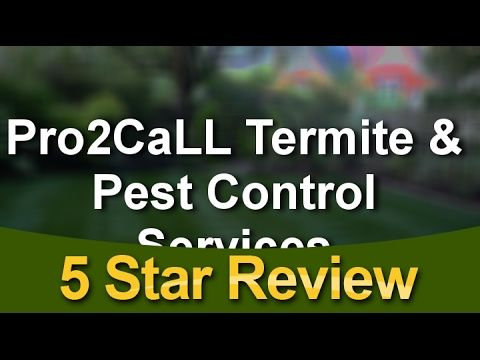 Pro2call Termite Pest Control Service Llc Seminole Reviews Excellent 5 Star Review Https Youtu Be A6yru9u Termite Pest Control Termite Control Pest Control
