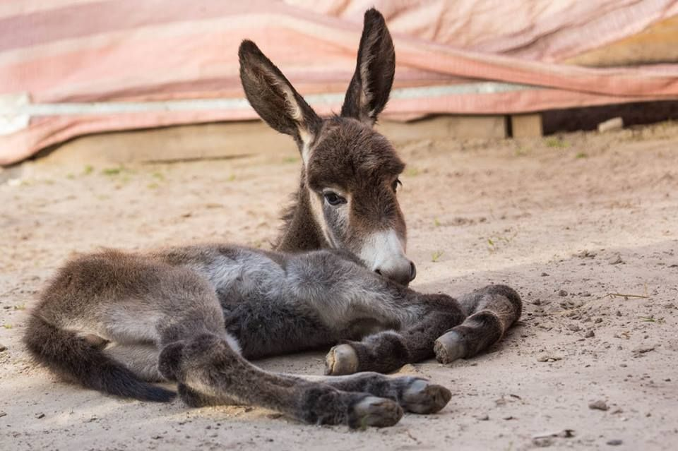 Daisy's newborn foal, 18 hrs old. Meet Squiggles!