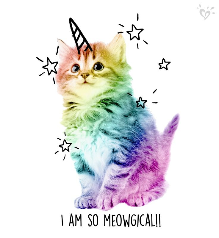 Rainbow Colored Kitty Cuteness So Purrty With Images Unicorn