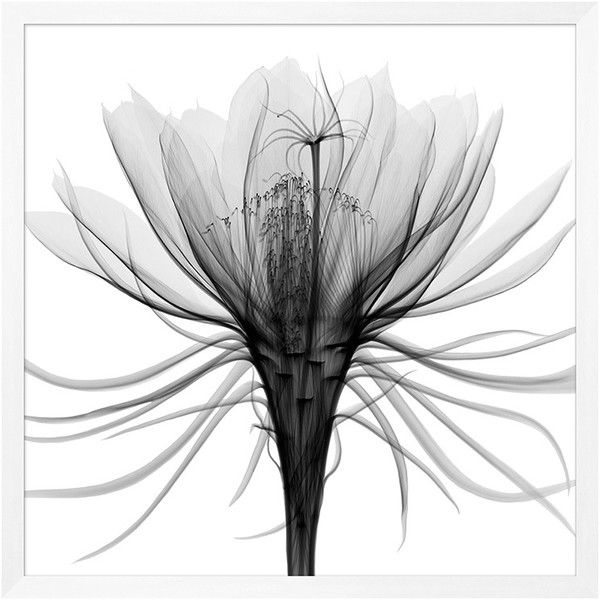 White wall art · Transparent Floral Framed Print #2 (14.599.120 IDR) ❤  liked on Polyvore