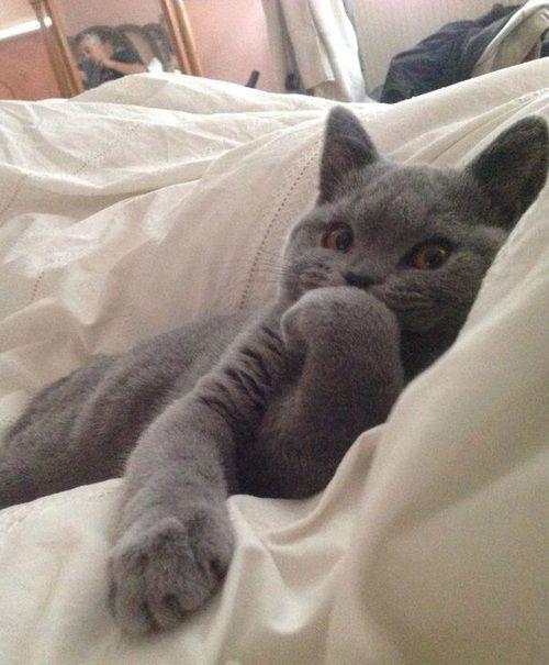 Qué? no han visto un gato en una cama ?