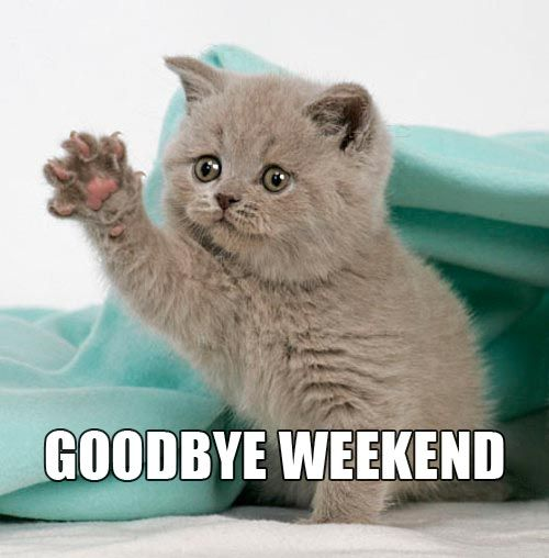 The Goodbye Weekend Kitten Wishing The Weekend Of Old A Very Fond Farewell And Is Patiently Awaiting For The Cute Cat Memes Funny Cat Memes Funny Monday Memes