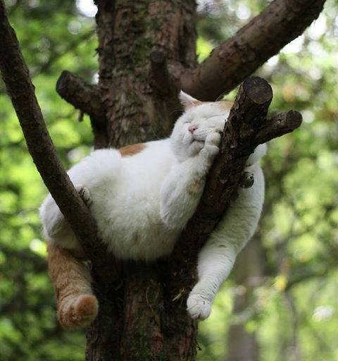 """/\_¸_/\ (=•_•= ) Cats sleep anywhere they please.... ღ♥*♥ღ.•*¨) ¸.•*¨) .("""")_("""") (¸.•* (¸.•*¨*•♥"""
