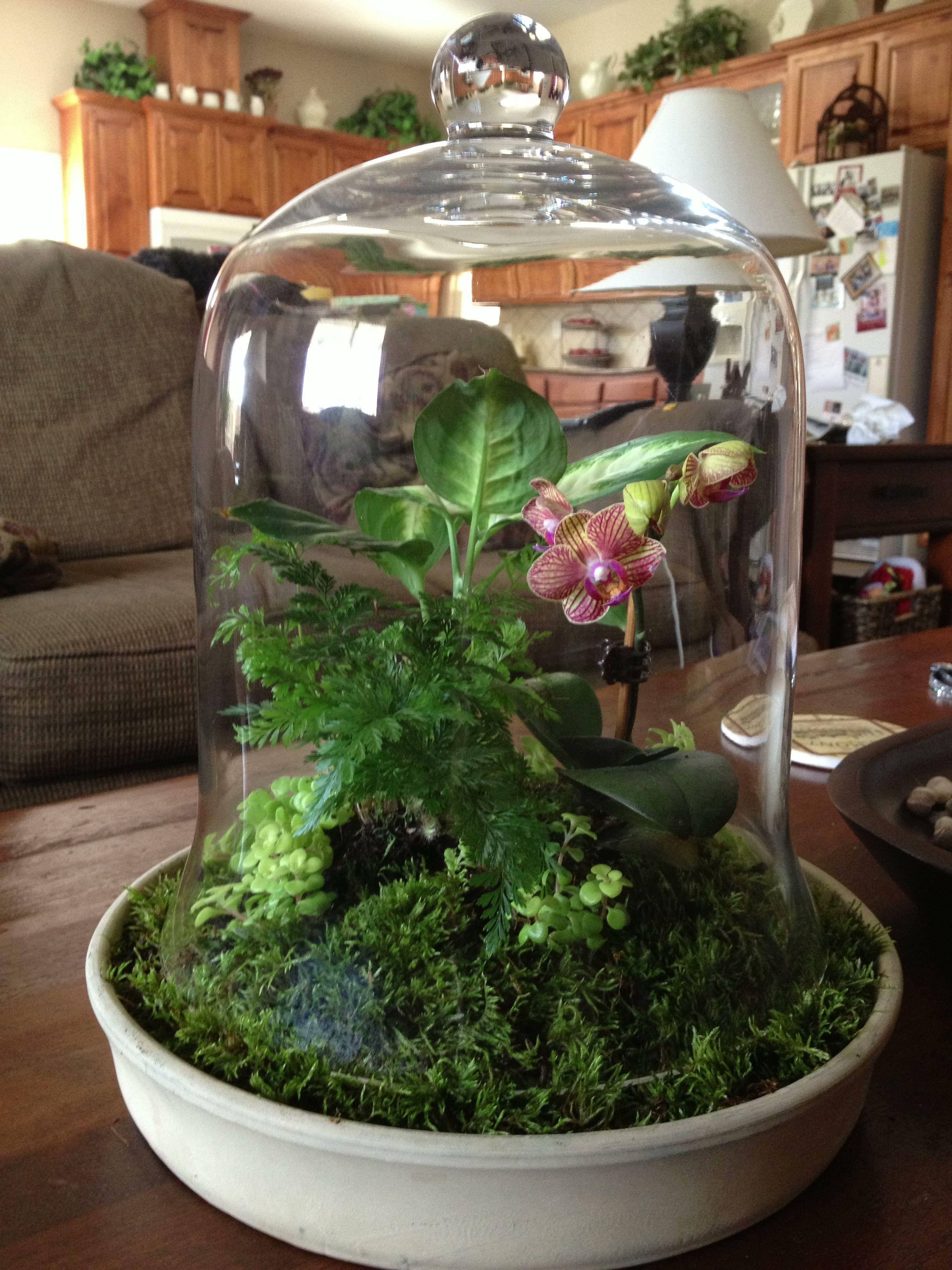 Cloche Terrarium With A Miniature Orchid Fern Dumb Cane Sedum