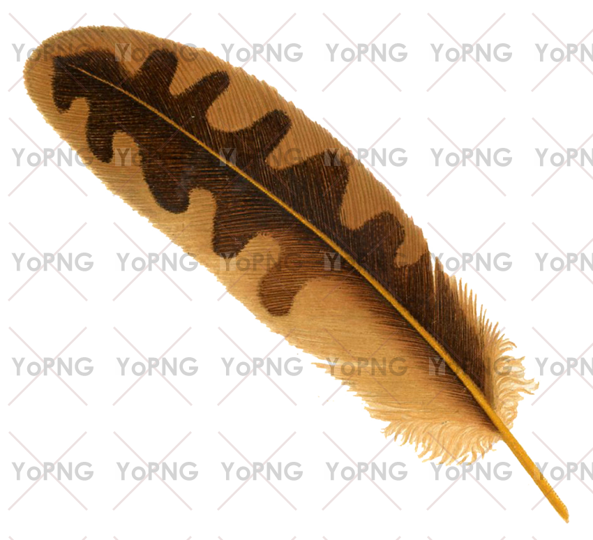 Feather Png Image Free Download For Design Png Images Png Photo Png