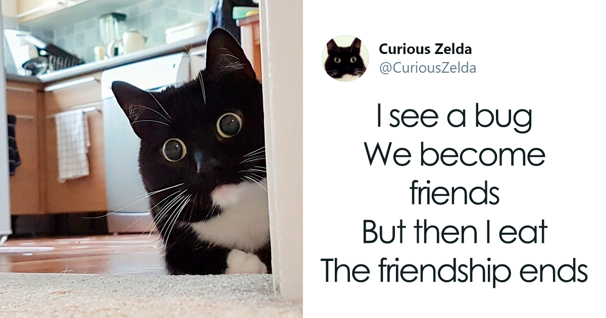 This Funny Cat Named Zelda Takes Over Twitter With Her Funny Posts 45 New Pics Funny Cat Names Funny Cats Funny